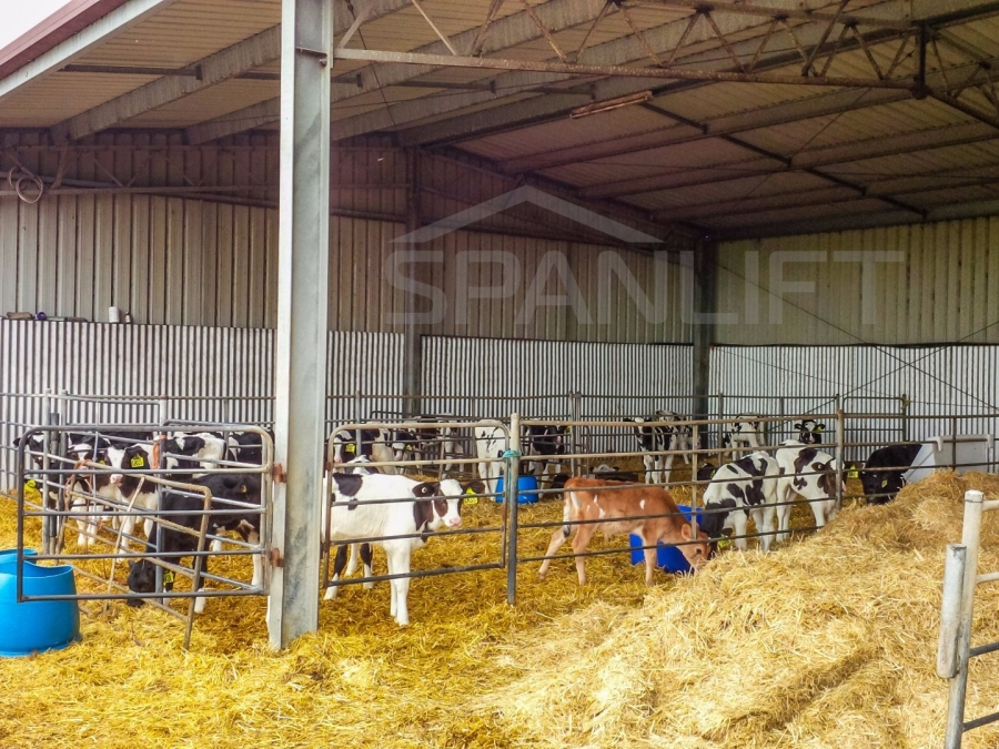 Calf Shed 16 Spanlift 8Y6f9Z - Gallery