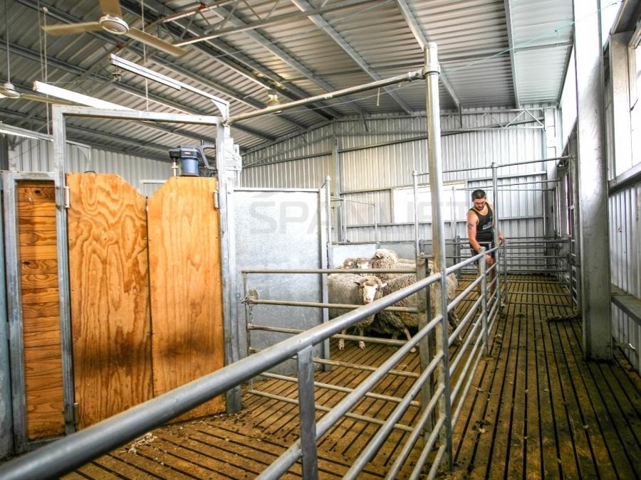 Shearing Shed 30 Spanlift A70fBS 1 - Shearing Sheds