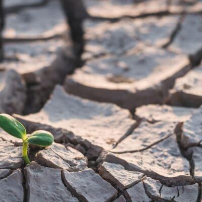 Drought blog header 400x400 - Home